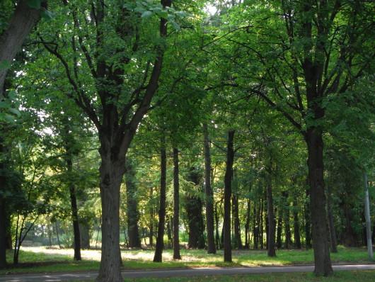 モスクワの森 美しい!